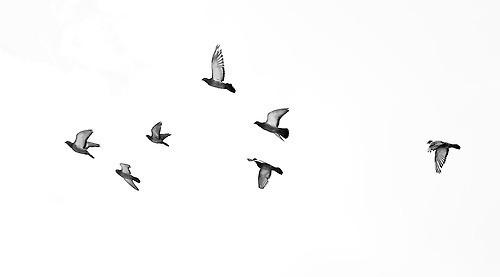 birds-drawing-ink-tattoo-Favim_com-113261