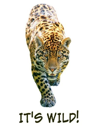 It's Wild! 2